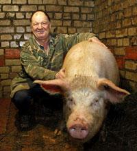 мужик и свинья